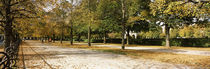 Autumnal trees in a park, Hofgarten, Munich, Bavaria, Germany von Panoramic Images