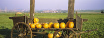Pumpkins in a wooden cart, Baden-Württemberg, Germany von Panoramic Images