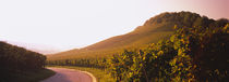 Road passing through vineyards, Weinsberg, Baden-Württemberg, Germany von Panoramic Images