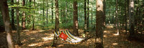 Hammock in a forest, Baden-Wurttemberg, Germany by Panoramic Images