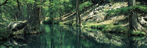 Stream in a forest, Honey Creek, Texas, USA by Panoramic Images