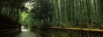Kyoto Prefecture, Kinki Region, Honshu, Japan by Panoramic Images