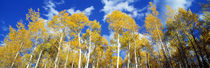 USA, Colorado, Uncompahgre Nationa Forest by Panoramic Images