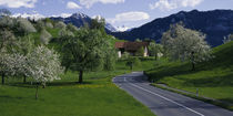 Switzerland, Luzern, trees, road by Panoramic Images