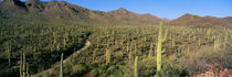 Saguaro National Park, Arizona, USA by Panoramic Images