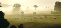 Farmland & Sheep Southland New Zealand by Panoramic Images