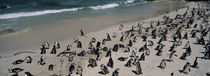 Simon's Town, Western Cape Province, South Africa by Panoramic Images