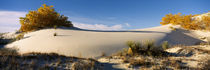 Desert plants in a desert, White Sands National Monument, New Mexico, USA by Panoramic Images