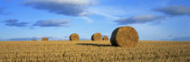 Hay Bales, Scotland, United Kingdom von Panoramic Images