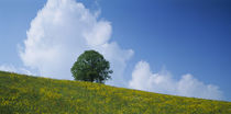 Green Hill w/ flowers & tree Canton Zug Switzerland by Panoramic Images