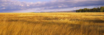 Crop in a field, Last Dollar Road, Dallas Divide, Colorado, USA by Panoramic Images