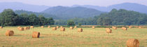Hay bales in a field, Murphy, North Carolina, USA by Panoramic Images