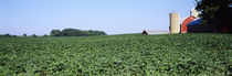 Soybean field with a barn in the background, Kent County, Michigan, USA by Panoramic Images