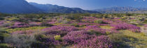 Anza Borrego Desert State Park, California, USA by Panoramic Images