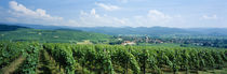 Panoramic view of vineyards, Kirchhofen, Markgraflerland, Baden, Germany by Panoramic Images