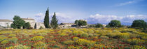 Buildings in a field, Majorca, Spain by Panoramic Images
