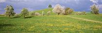 Switzerland, Zug, fields in bloom von Panoramic Images