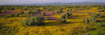 Sonoma Valley, California, USA by Panoramic Images