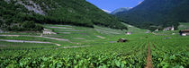 High Angle View Of A Vineyard, Valais, Switzerland by Panoramic Images