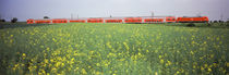 Commuter train passing through oilseed rape fields, Baden-Wurttemberg, Germany by Panoramic Images