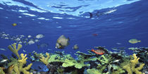 School of fish swimming in the sea, Digital Composite by Panoramic Images