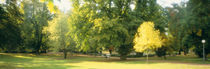 Trees in a park, Wiesbaden, Rhine River, Germany by Panoramic Images