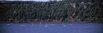 wind surfing in a river, Hood River, Oregon, USA by Panoramic Images