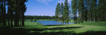 Trees on a golf course, Edgewood Tahoe Golf Course, Stateline, Nevada, USA by Panoramic Images