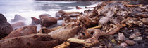 Driftwood on the beach, Oregon Coast, Oregon, USA von Panoramic Images