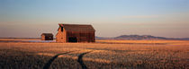 Barn in a field, Hobson, Montana, USA by Panoramic Images