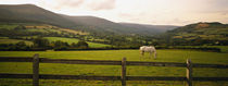 Horse in a field, Enniskerry, County Wicklow, Republic Of Ireland by Panoramic Images