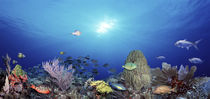 School of fish swimming in the sea by Panoramic Images