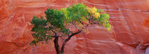 Escalante National Monument, Utah, USA by Panoramic Images