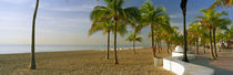 Palm trees on the beach, Las Olas Boulevard, Fort Lauderdale, Florida, USA by Panoramic Images