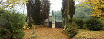 Trees near a gate, La Poderina, Tuscany, Italy by Panoramic Images