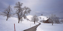 Switzerland, Canton of Zug, Linden trees on a snow covered landscape by Panoramic Images