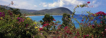 Tropical flowers at the seaside, Deshaies Beach, Deshaies, Guadeloupe by Panoramic Images