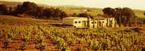 Farmhouses in a vineyard, Penedes, Catalonia, Spain by Panoramic Images