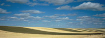 Clouded sky over a striped field, Geraldine, Montana, USA von Panoramic Images
