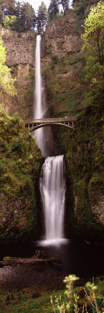 Waterfall in a forest, Multnomah Falls, Columbia River Gorge, Oregon, USA von Panoramic Images