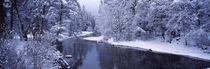 Snow covered trees along a river, Yosemite National Park, California, USA by Panoramic Images
