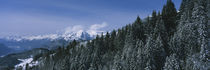 Trees in a forest, Interlaken, Berne Canton, Switzerland by Panoramic Images