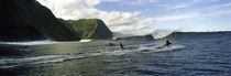 Surfers in the sea, Hawaii, USA von Panoramic Images