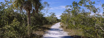 J.N. Ding Darling National Wildlife Refuge, Sanibel Island, Florida, USA von Panoramic Images