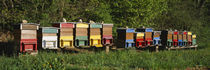 Row of beehives, Switzerland by Panoramic Images