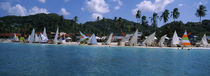 Sailboats on the beach, Grenada Sailing Festival, Grand Anse Beach, Grenada von Panoramic Images