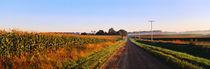 Panorama Print - Straße entlang eines Maisfelds, Illinois, USA von Panoramic Images
