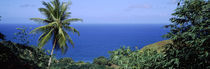 Palm trees on the coast, Tobago, Trinidad And Tobago von Panoramic Images
