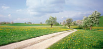 Dirt Road Canton Zug Switzerland by Panoramic Images