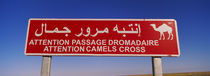 Low angle view of a camel crossing signboard, Douz, Tunisia von Panoramic Images